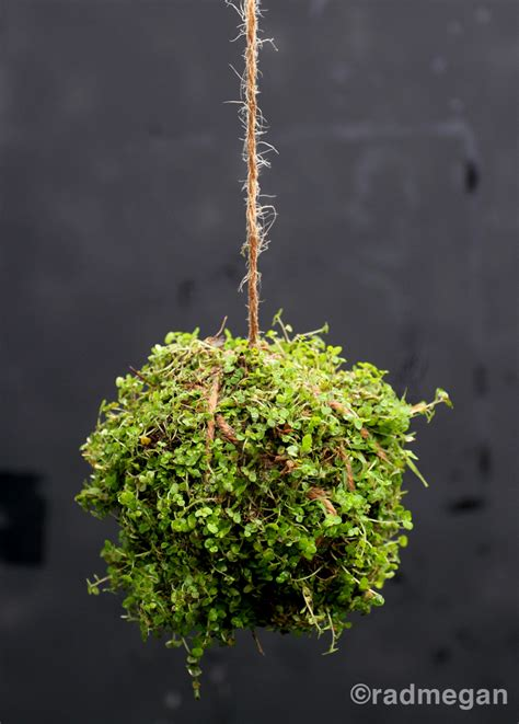 inspired by twitter making string gardens radmegan