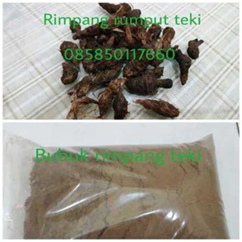 Umbi Rumput Teki Kering jual rimpang rumput teki oleh herbal alami di surabaya