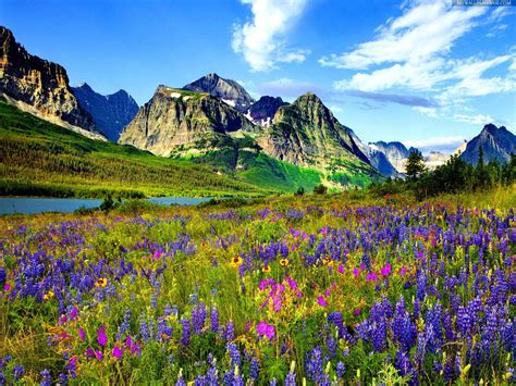mountain rocky wallpaper colorado flowers mountain