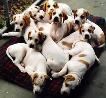 puppy breeder itchmo news for dogs cats 187 archive 187 a look at