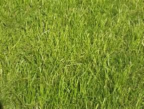 vaizdas grass jw jpg vikipedija