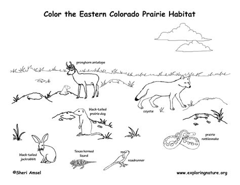 coloring pages of animals in their habitats 80 coloring pages of wetland animals grassland