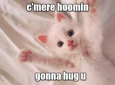 Mere Cat Meme - c mere lolcats lol cat memes funny cats funny