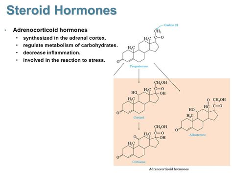 carbohydrates hormones steroid hormones cholesterol starting material ppt