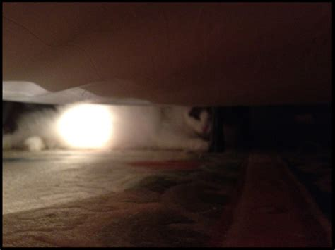 new cat hiding under bed levitra new zealand