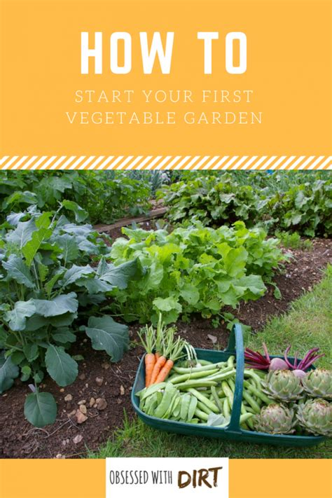 vegetable gardening for beginners how to plan your