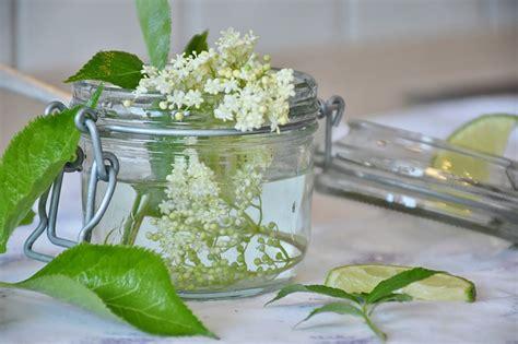 fiori di sambuco proprietà fiori di sambuco usi propriet 224 tisana infuso ricette