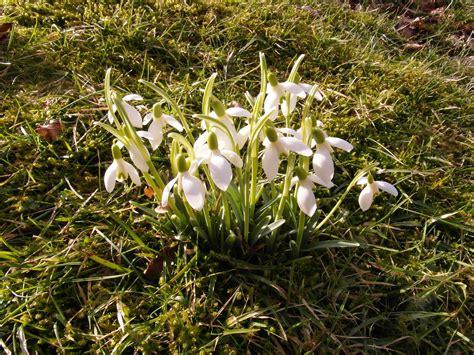 Garten Pflanzen Februar by Der Garten Im Februar Kr 228 Utergarten Magazin