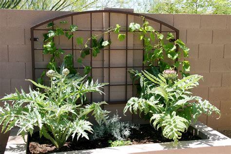 Custom Trellis custom metal gardening trellis arizona trellis gardening trellises