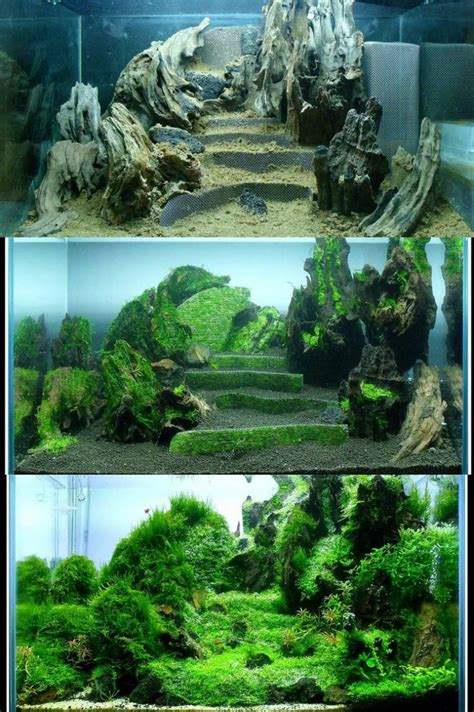what is aquascaping progression of terraces in a nano tank aquascaping