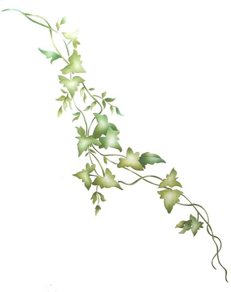 ivy vine ivy vine border