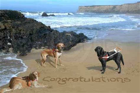 Guiding For The Blind Cards - congratulations guide dogs for the blind