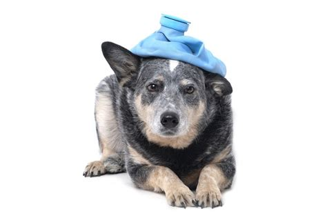 symptoms of failure in dogs what plants are poisonous to dogs veterinarians talk local talk local