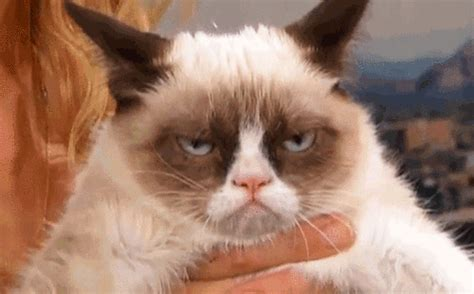 Cat Meme Gif - grumpy cat gif find share on giphy