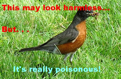 image poisonous bird png wackypedia the nonsensical