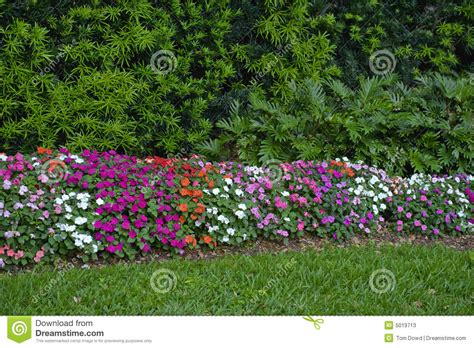colorful flower hedge stock image image of colours flowers 5019713