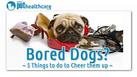 do dogs get bored 5 indoor activities to cheer up a bored pethealthcare co zabored dogs things to