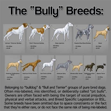breed bully what is the difference between american bully and american pit bull terrier triline