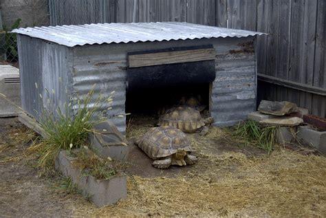 tortoise house tortoises photo album