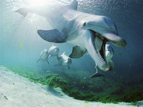 lumba lumba lucu animal planet