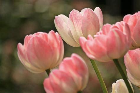 fiori e fiori cinque emblematiche frasi sui fiori cinque cose
