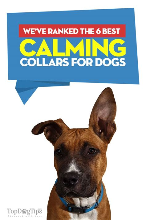 best collars for dogs top 6 best calming collar for dogs brands that re most