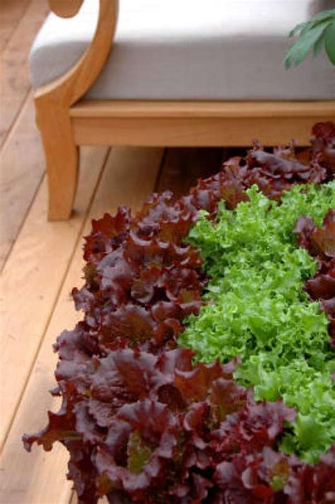 container vegetable gardening houston chronicle