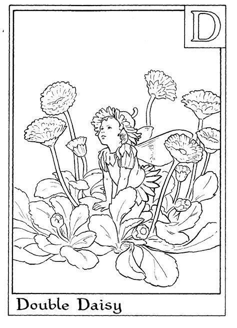 flower coloring pages coloring sheets fairies