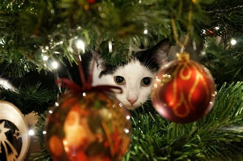 cat resistant wallpaper 10 tips to cat proof your christmas tree