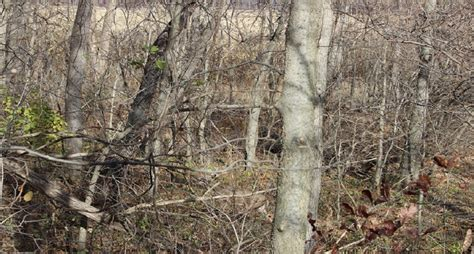Find Photos Of Bet You Can T Find These Deer Pics Wide Open Spaces