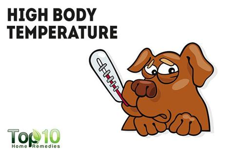 dogs normal temperature 10 signs and symptoms that your is sick top 10 home remedies