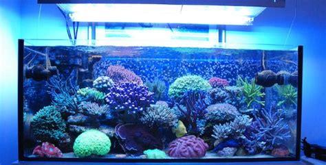 illuminazione acquari illuminazione led acquari flexsolight