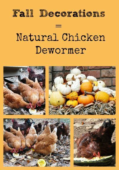 backyard poultry naturally fall decorations are natural chicken dewormers backyard