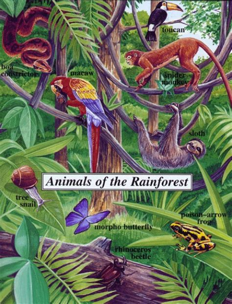 what of plants live in the tropical rainforest endangered animals in the rainforest