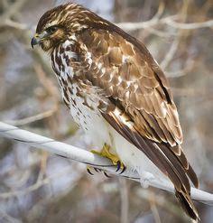 1000 images about ragadoz 243 madarak on pinterest birds