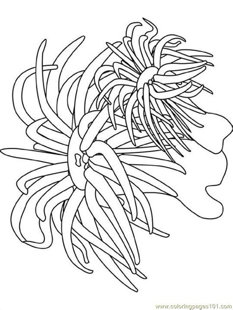Sea Anemone Coloring Page coloring pages sea anemone world gt seas and