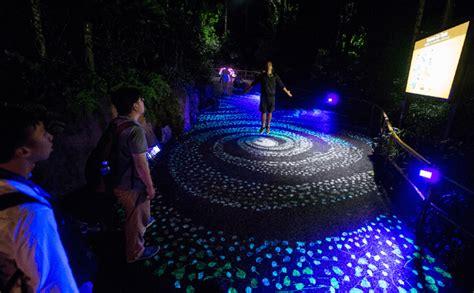 lights safari 2017 november 17 twilight encounters 2017 safari set aglow for the