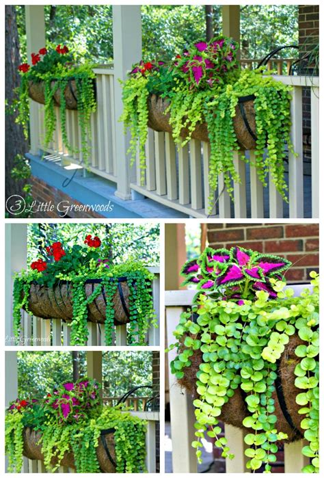 Best Planter Flowers by The Best Plants For Hanging Baskets On Front Porches