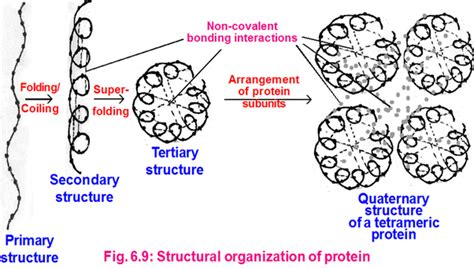 protein quaternary structure are quaternary structures found in all proteins