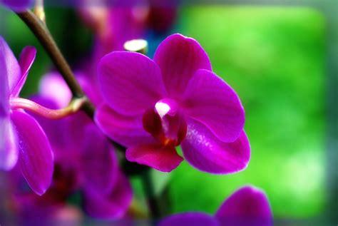 imagenes flores bellas gratis fotos de flores bonitas gratis color violeta imagenes de