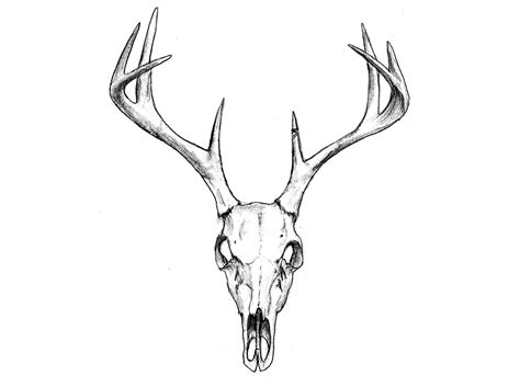 deer skull tattoos designs deer skull temporary candid wedding
