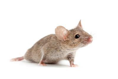 Was Ist Eine Maus by Wie Fange Ich Eine Maus So Klappt S