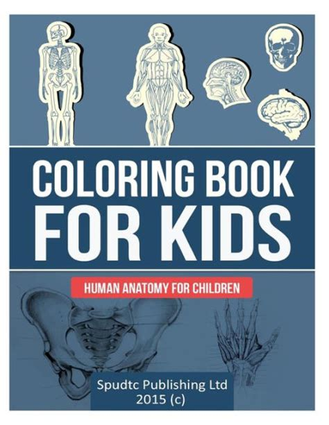 anatomy coloring book barnes noble coloring book for human anatomy for children by