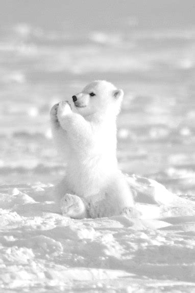 30+ Cute Animals That Will Melt Your Heart - UltimateRepins