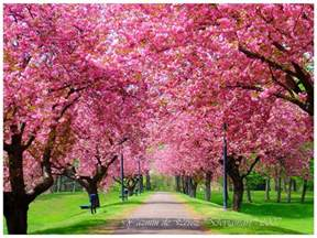 Beautiful Spring by Beautiful Spring Season Photo Pictures To Pin On Pinterest