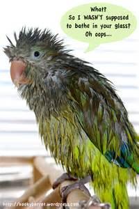 April Bath Shower wet bird screechandsquawk
