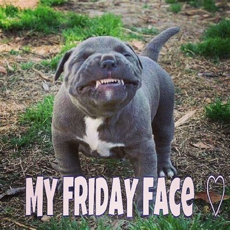 friday puppy image gallery happy friday puppy