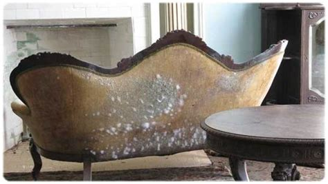 how to get rid of mold in a house how to get rid of mold naturally at home with ease 8 tips