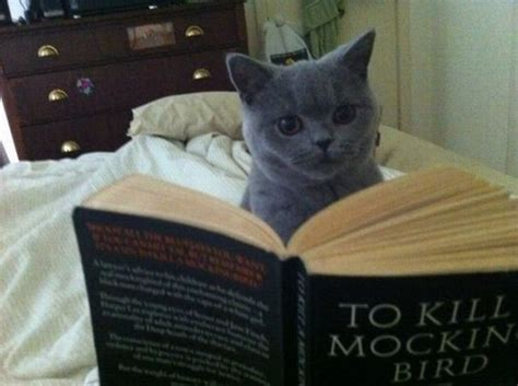 To Kill A Mockingbird Cat Meme - reading cats the cultural cat