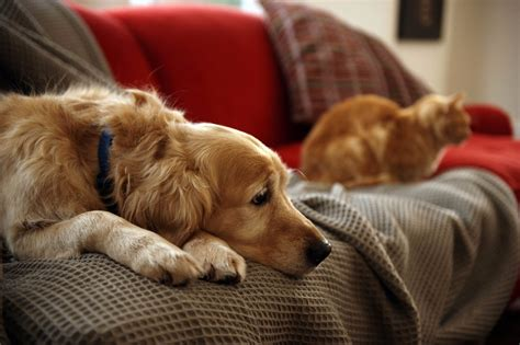 way to euthanize at home in home pet euthanasia hospice care saying goodbye to pets in the most loving